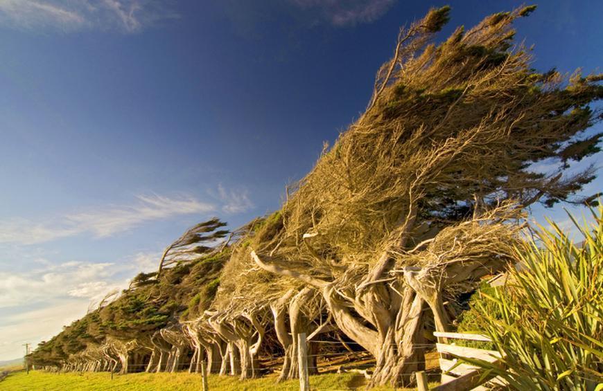 Склон Пойнт (Новая Зеландия)