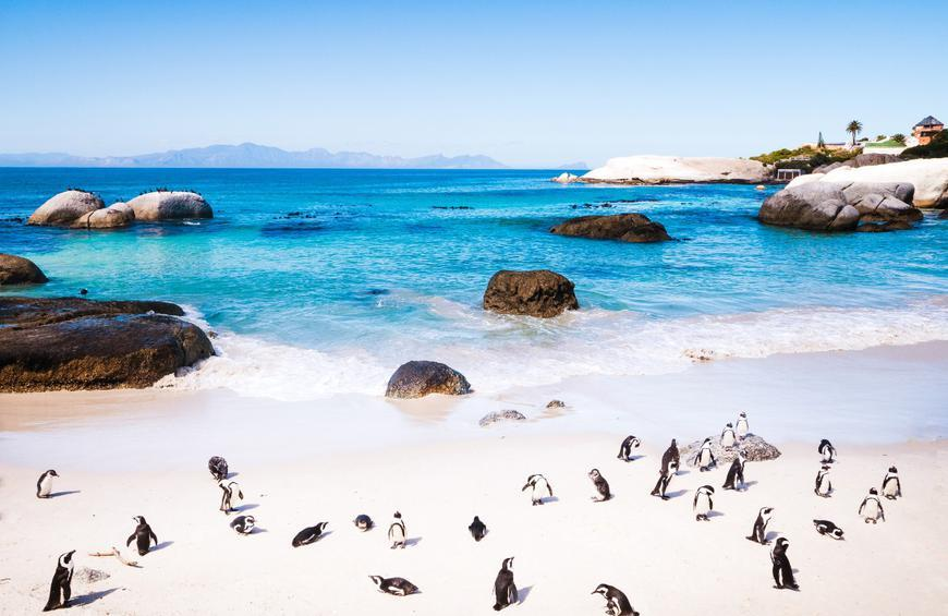 Boulders Beach (Cape Town, South Africa)