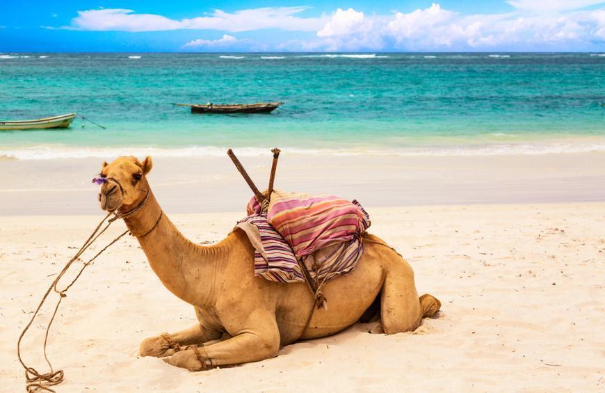 Диани-Бич (Diani Beach, Кения)